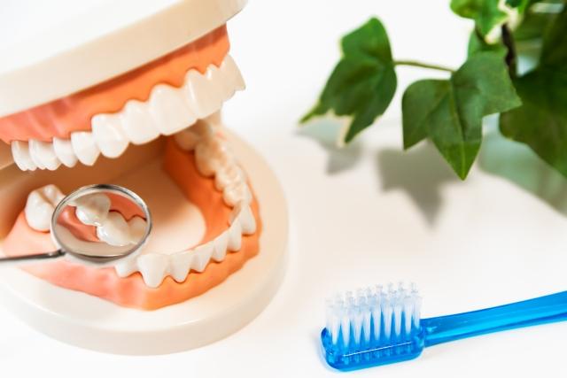 生臭い息の対策②歯垢や歯石の除去